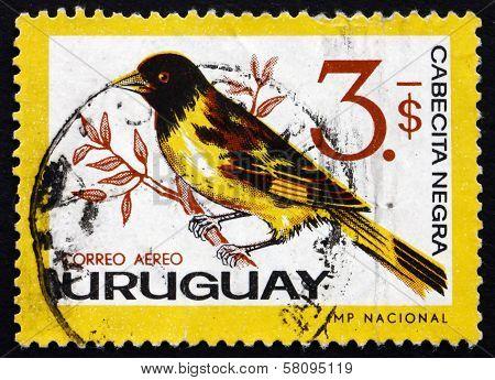 Postage Stamp Uruguay 1963 Hooded Siskin, Passerine Bird