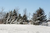 picture of blanket snow  - Snow blankets evergreen trees and fences in a beautiful winter setting.