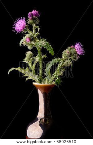 Thistle Flowers In Vase