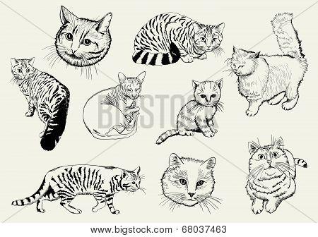 home pet cat
