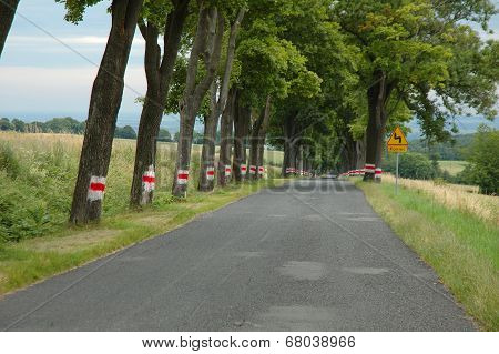 Road Between Trees