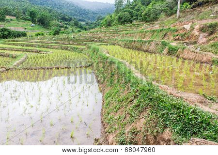 Rice Field Terraces In Doi Inthanon, Ban Sob Aeb Chiangmai Thailand