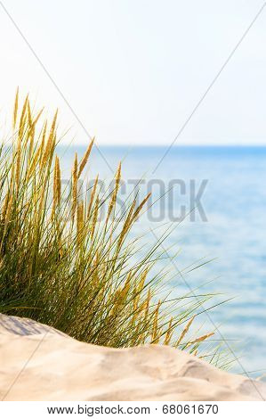 Bright Beach Scene