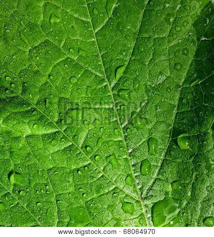 Leaf Raindrops Background