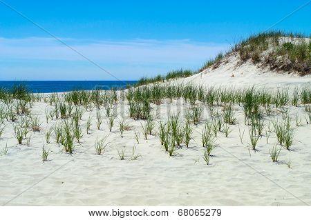 Dunes Long Beach Island