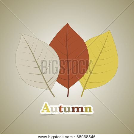 Three autumn fall leaves illustration