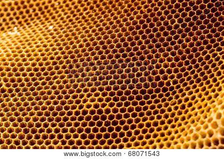 Beautiful Honeycomb Without Honey Texture