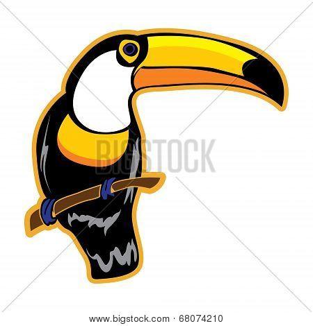 Bird. Toucan on a white background.