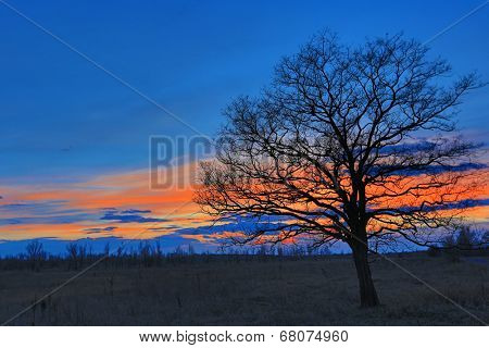 leafless tree on meadow on sunset sky background