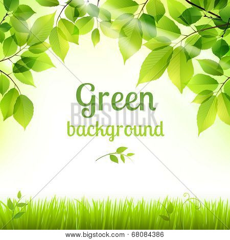 Natural green fresh foliage background