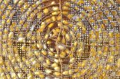 stock photo of cocoon  - Silkworm Cocoon For Embroidery  - JPG