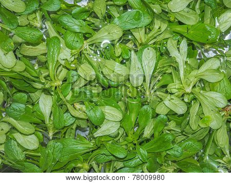 Green Salad Vegetables