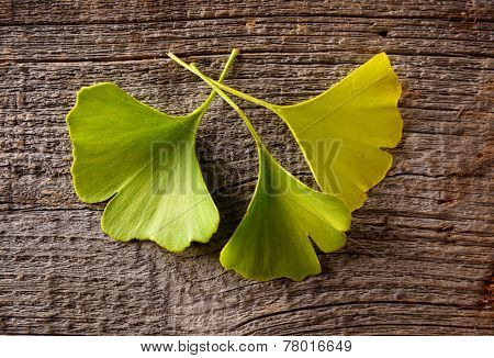 Gingko biloba fresh leaves on wooden board