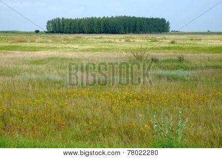 country scene with grove, Serbia