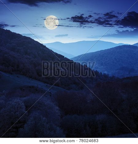 Autumn Forest On A  Mountain Slope At Night