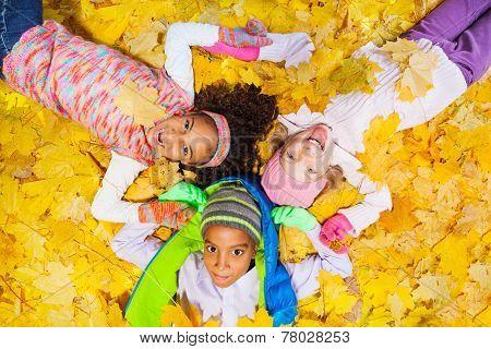 Orange yellow maple leaves