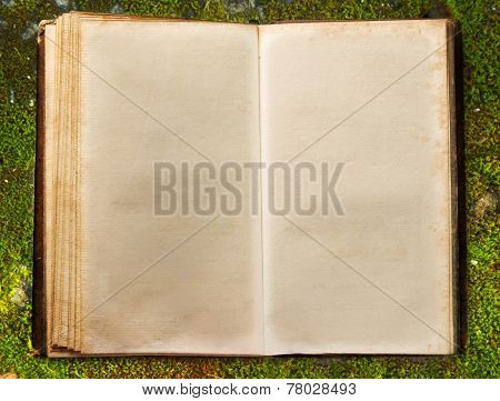 Book On Autumn Moss Ground