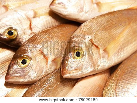 Common Pandora Pagellus Erythrinus Mediterranean Sea Food Fresh Fish On Ice Barcelona Market