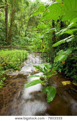 Stream In Rain Forest