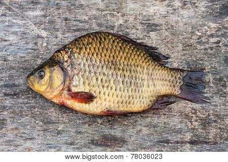 Live Freshwater Fish Carp On A Wooden Board