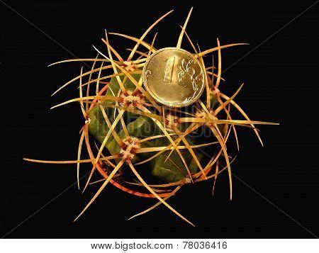 Gymnocalycium cactus and coin