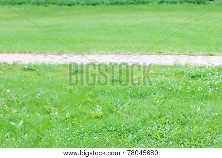 Paved Path Tiles In Middle Of Green Lawn In Summer Sunny Day