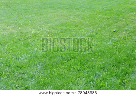 Closeup Part Of Glade With  Green Grass In Warm Summer Sunny Day