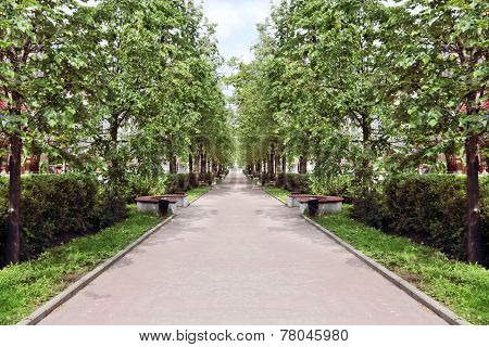 Beautiful Avenue With Green Trees And Bench In Summer Sunny Day