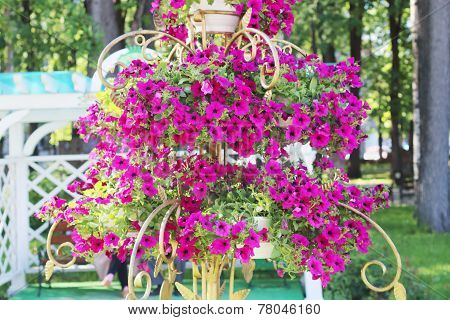 Pink Flowers In Gilt Vase In Summer Sunny Park