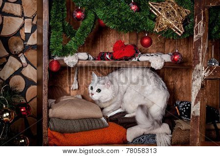 Pretty gray cat, holidays, christmas, new year
