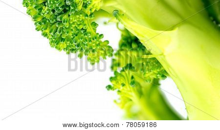 Extreme Closeup Of Chopped Broccoli Isolated Against White Background