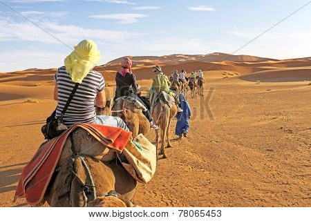 Camel caravan going through the sand dunes in the Sahara