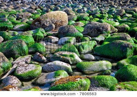 Rocks covered with seaweeds background