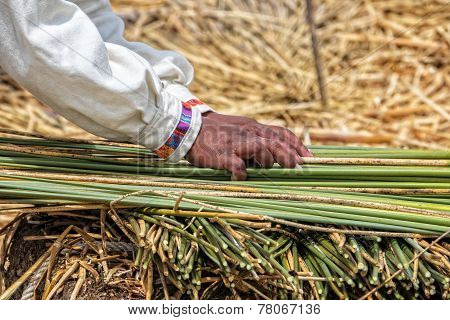 Uru Sorting Reed For Island