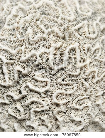 Texture formed by the detail of a coral
