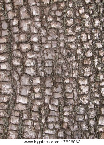 Alligator Juniper Bark