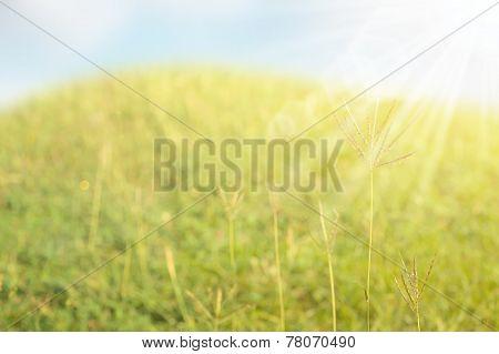 Abstract Lalang grass field