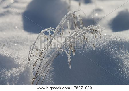 Hoarfrost coveredst grass