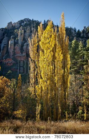 Fall Colors, Sedona Arizona