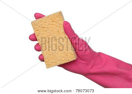 Cleaning Equipment, Sponge In Hand