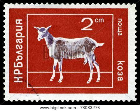 Vintage  Postage Stamp. Goat.