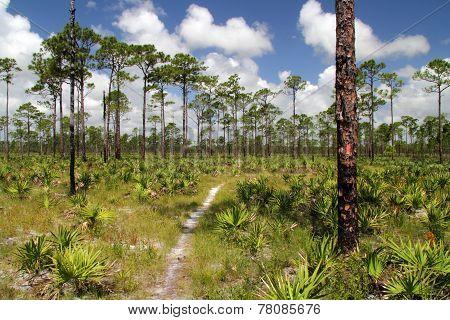 Pinelands Hiking Trail