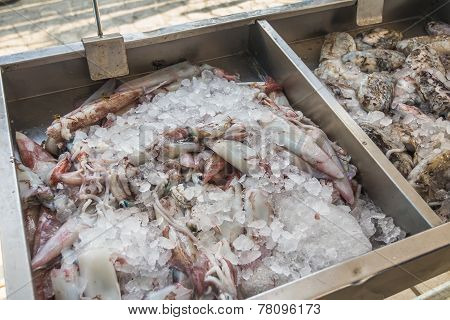 Fresh Sea Squid For Sale On Greek Island Kalymnos
