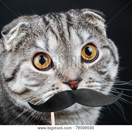 Portrait Of A Young Cat With Paper Mustaches
