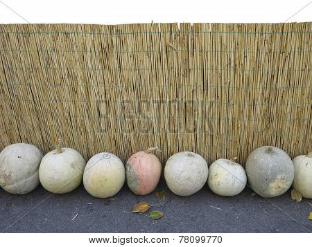 Yellow Vintage Bamboo Fence With Pumpkins