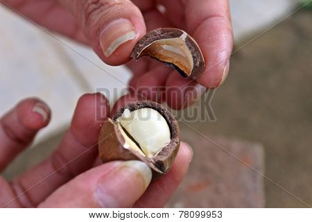 Cracked macadamia nuts