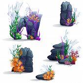 image of green algae  - Images of sea stones with vector algae - JPG