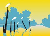 pic of pole  - Editable vector illustration of white egrets perched on poles in a lake - JPG
