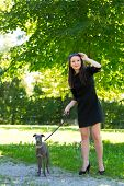stock photo of greyhounds  - Young attractive girl  walking with greyhound n the park - JPG