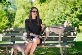 pic of greyhounds  - Young attractive girl sitting on bench with two greyhounds in the park  - JPG